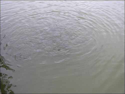 Water by Godwin Jones