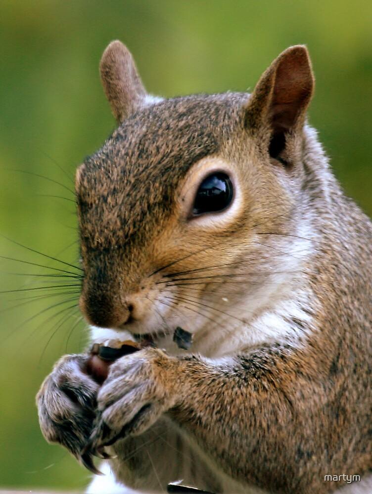 squirrel by martym