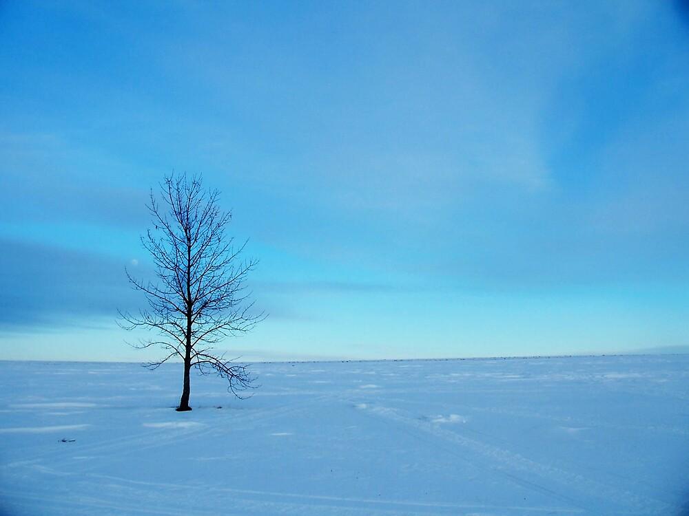 Winter Blue 2 by Gene Cyr