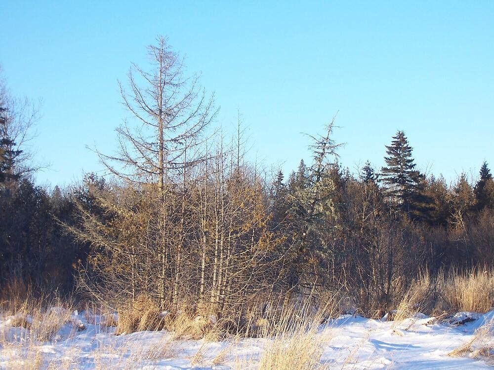 Winter Scene by Gene Cyr
