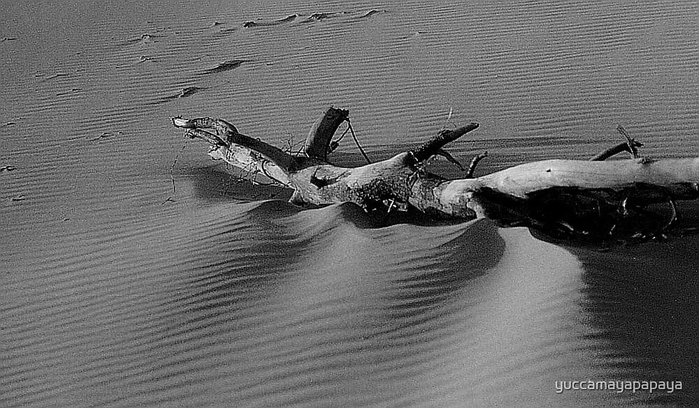 driftwood on the oregon coast by yuccamayapapaya