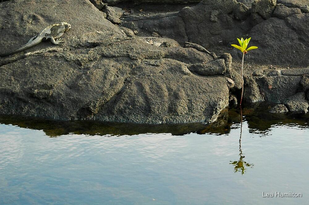 Little Tree by Lea Hamilton
