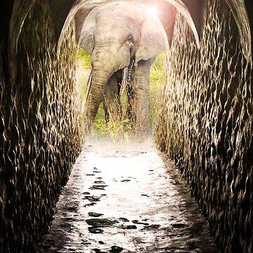 Way to Mole-Nationalpark (Ghana) by novopics