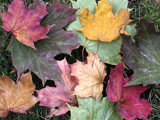 Autumn Leaves by Luci Mahon