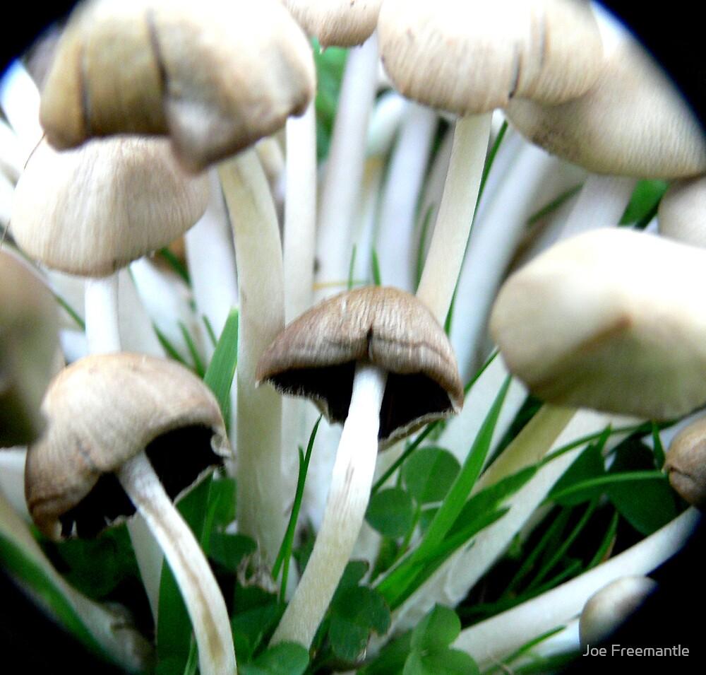 macro mushrooms by Joe Freemantle