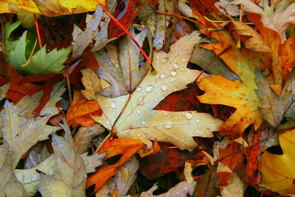 Weeping Leaves by Melissa Arel Chappell