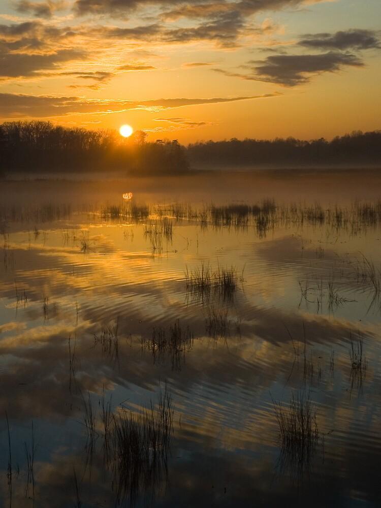 Ripple into Fog by David Linkenauger
