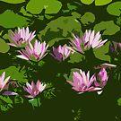 lillies by senoirpob