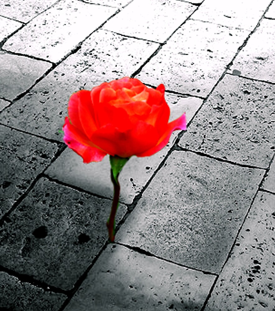 city rose by CheyenneLeslie Hurst