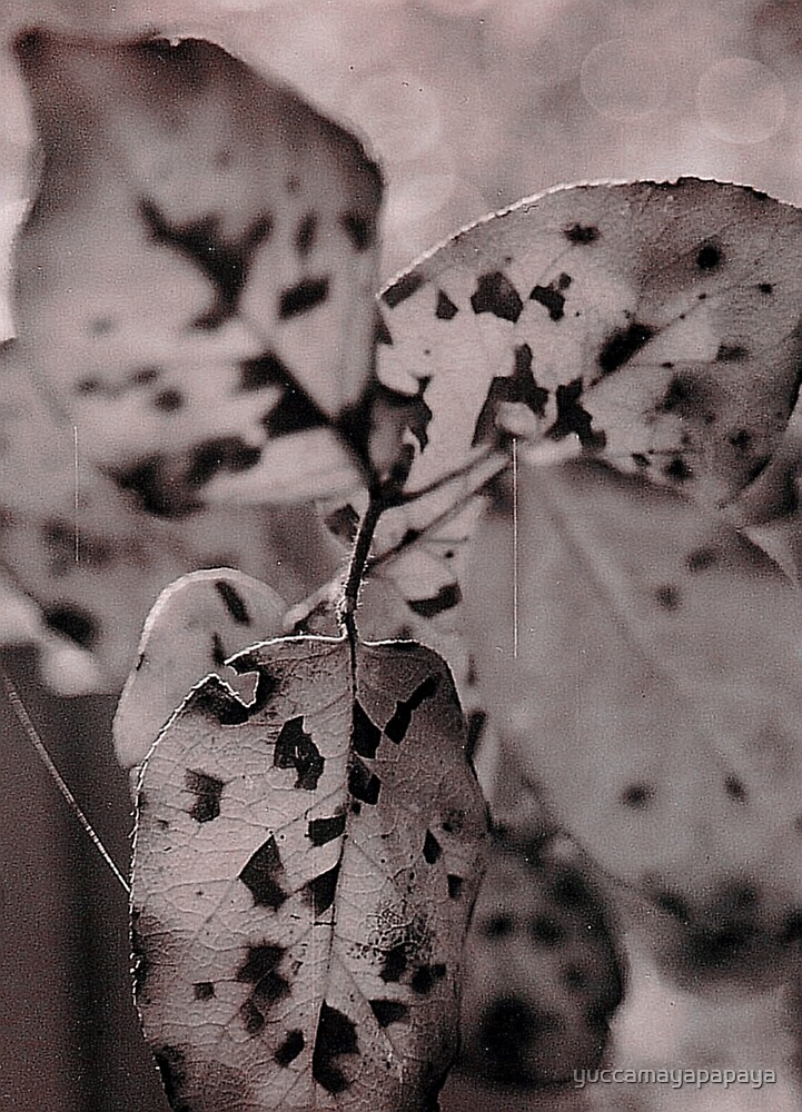 leaves leaves  by yuccamayapapaya