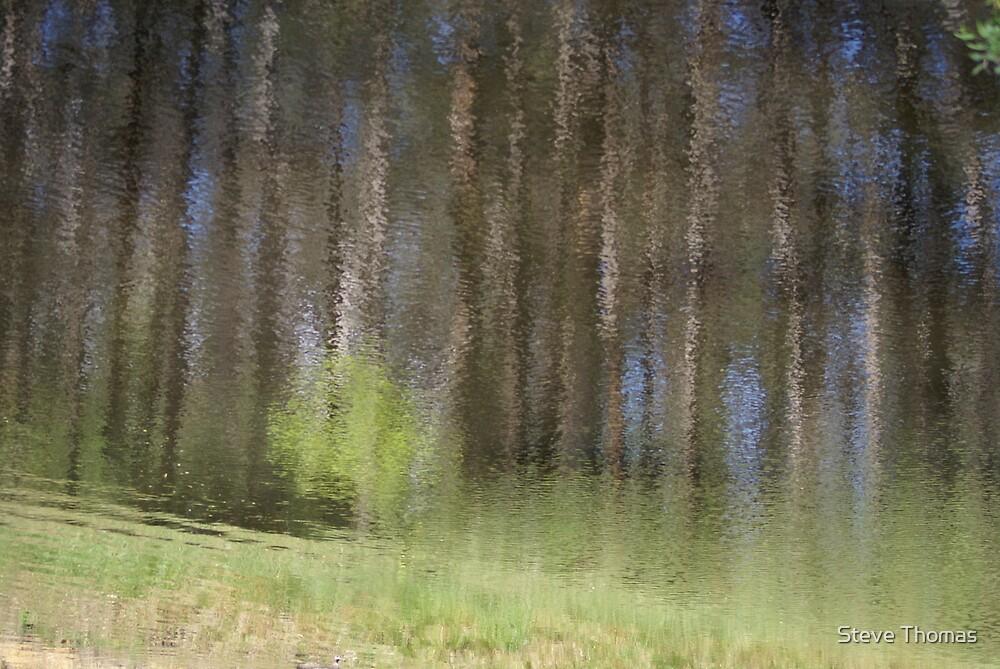 Bush Monet #2 by Steve Thomas