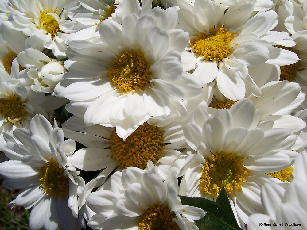 Daisies by dewinged