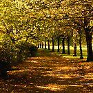 October Days by Chris Clark