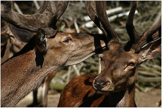 Deer Secrets by Wayne King