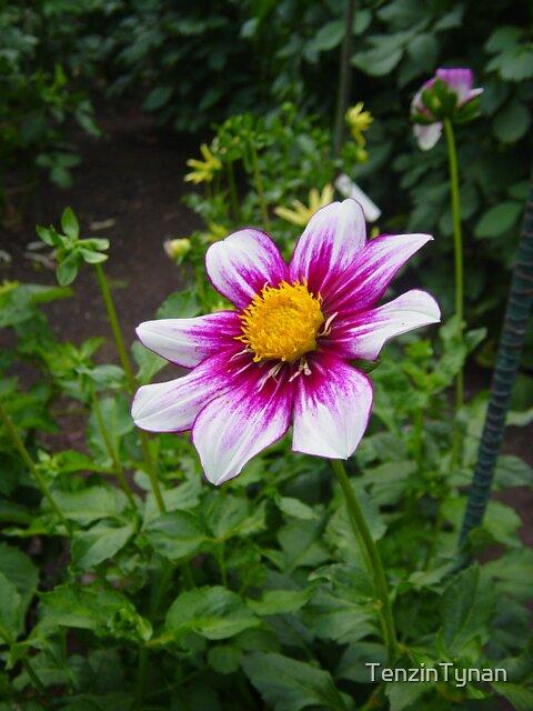 Spokane Rose Garden by TenzinTynan