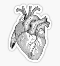 Study of the Heart Sticker