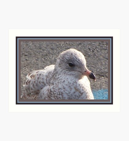 Freckled Gull Art Print