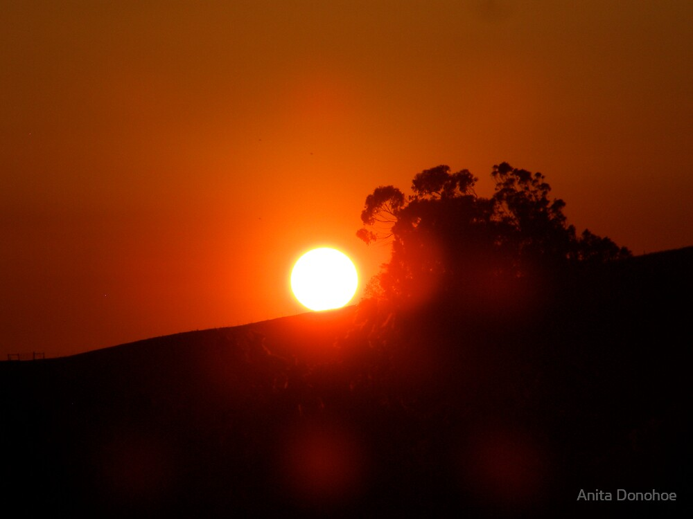 Sun On Fire by Anita Donohoe