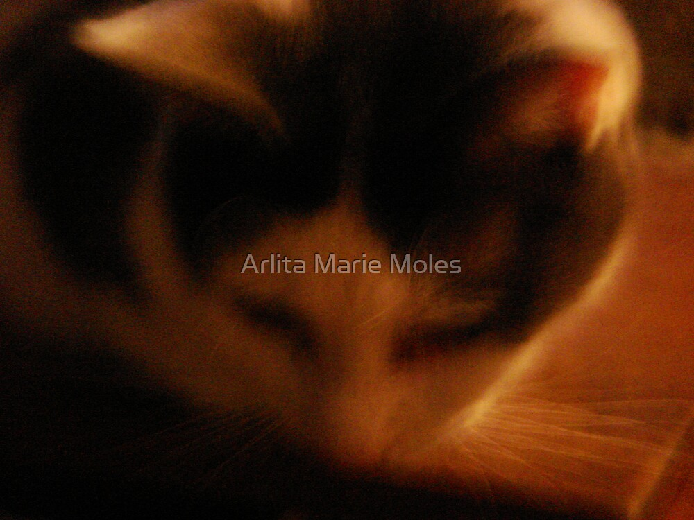 Soft Kitty by Arlita Marie Moles
