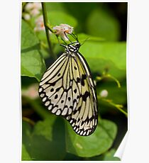 Rice Paper Butterfly 1 Poster