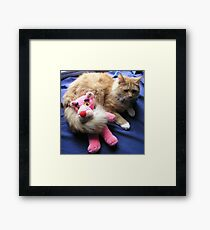 Cat with Toy Framed Print