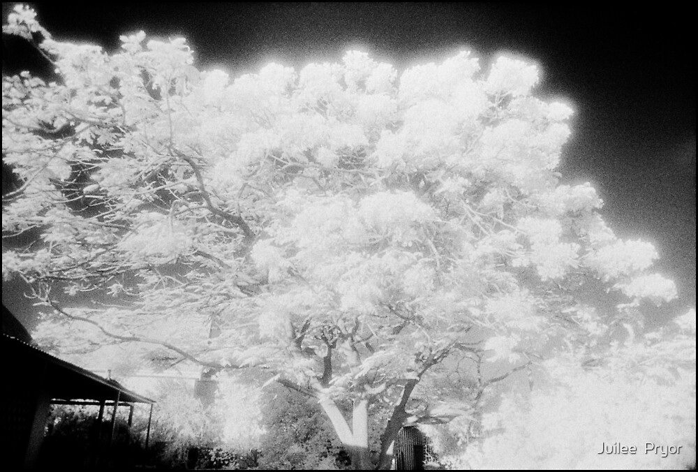 flaming tree top by Juilee  Pryor