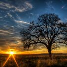 Lonely Tree by Scott Sheehan