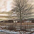 Winter's golden light by amgunnphotoart