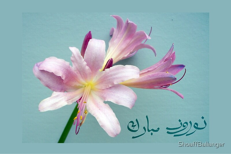 Happy norooz in farsi persian new year surprise lily greeting happy norooz in farsi persian new year surprise lily by shoaffballanger m4hsunfo Image collections