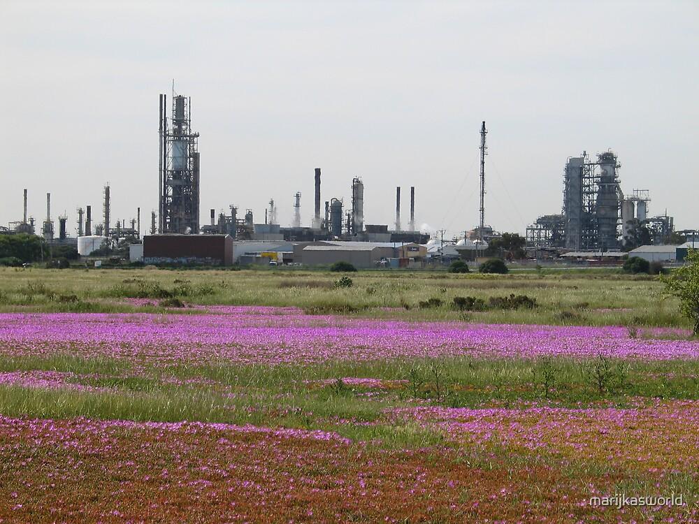 Refinery plus Carporbrotus modestus by marijkasworld