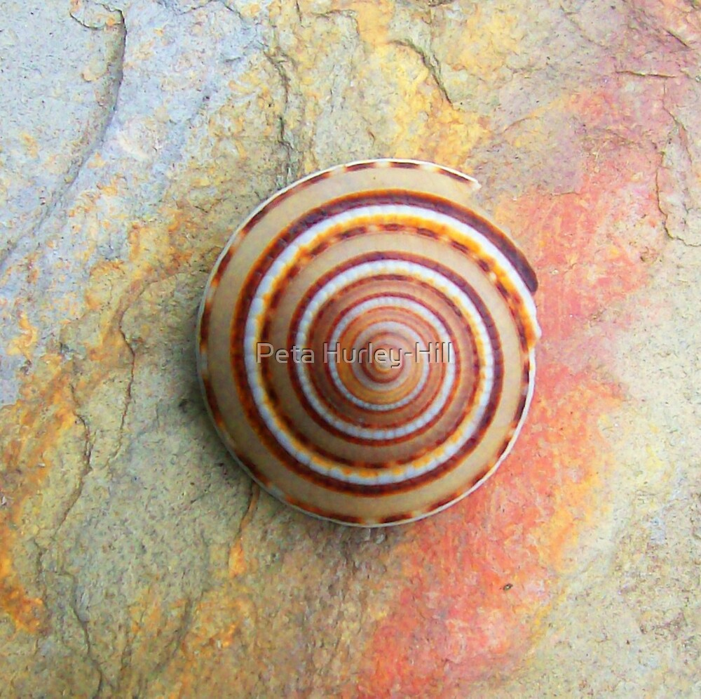 spiral shell by Peta Hurley-Hill