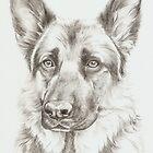 German Shepherd - Sadie by lizblackdowding