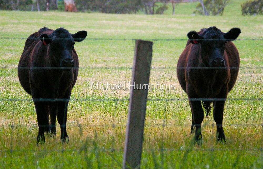 Farm Nightclub Bounces by Michael Humphrys