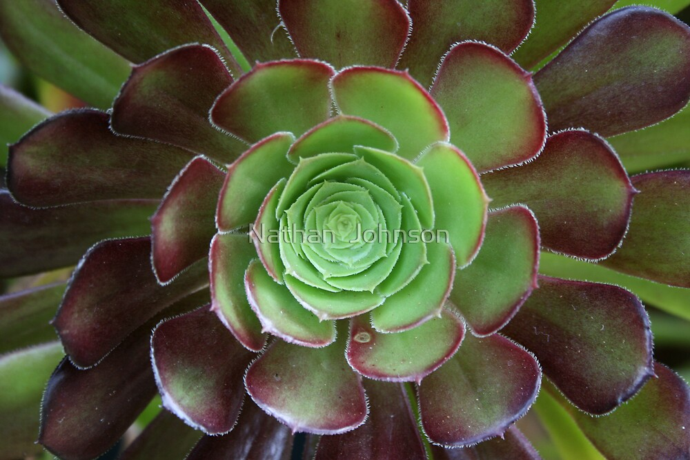 Succulent by Nathan  Johnson