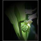 Ready To Bloom  by Carlo Cesar Rodillas