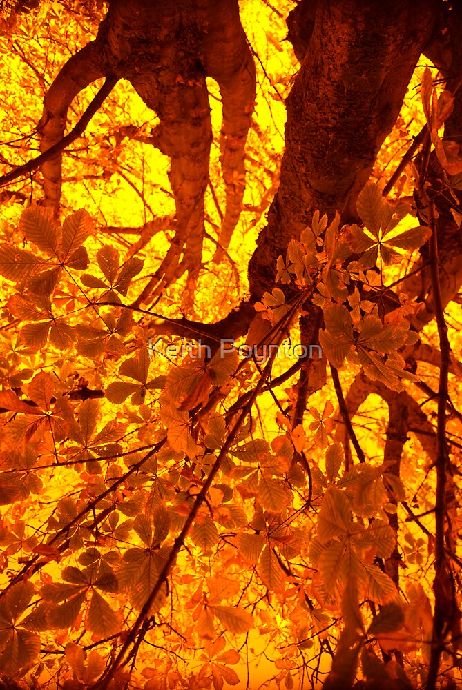 Tree Fire 2 by Keith Poynton
