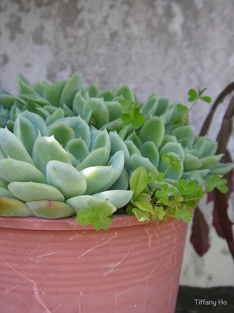 Grandpa's pot plant by Tiffany Ho