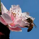 Bee On The Peach Blossom by Heather Friedman