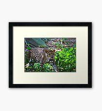 Predator on the Prowl Framed Print