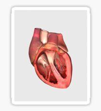 Heart valves showing pulmonary valve, mitral valve and tricuspid. Sticker
