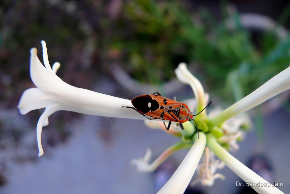 The bug by Dr. Sandeep Jain