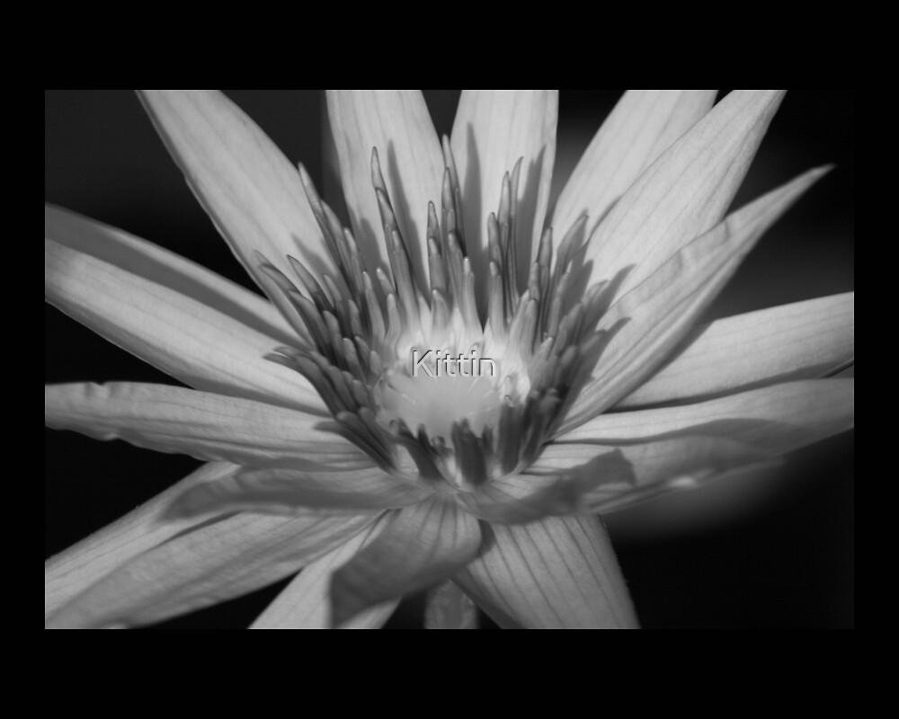 flower 20 by Kittin