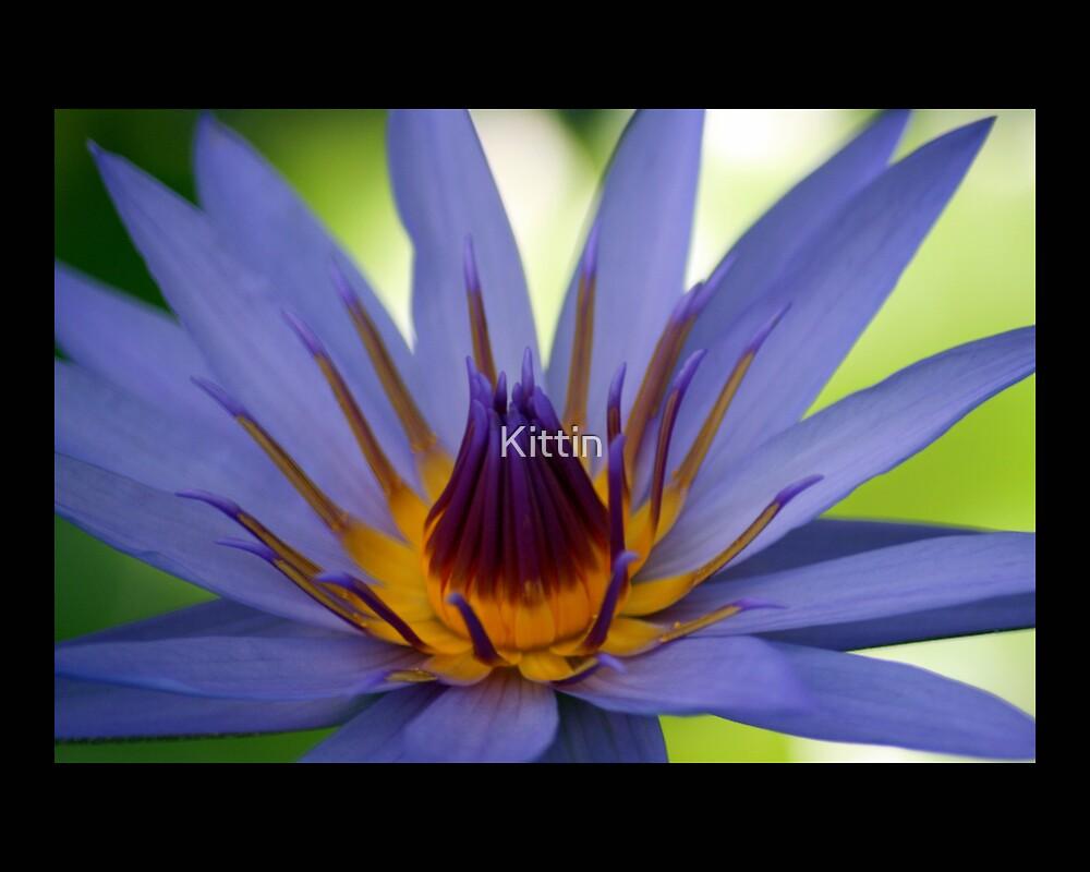 flower 21 by Kittin
