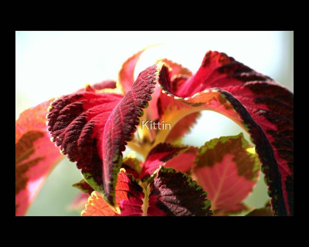 leaves 08 by Kittin