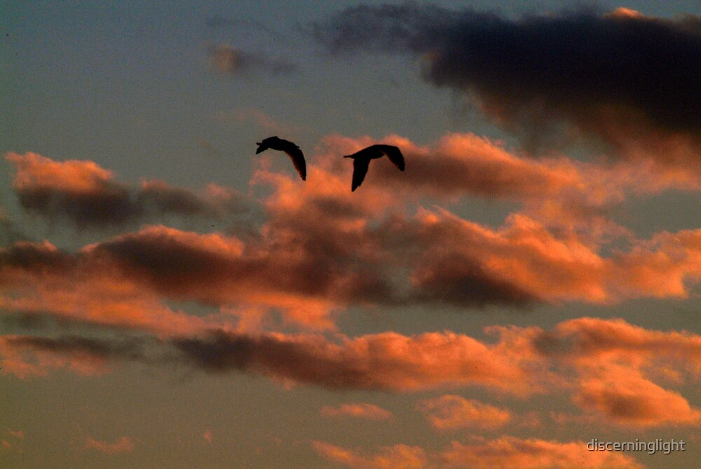 Freedom by discerninglight