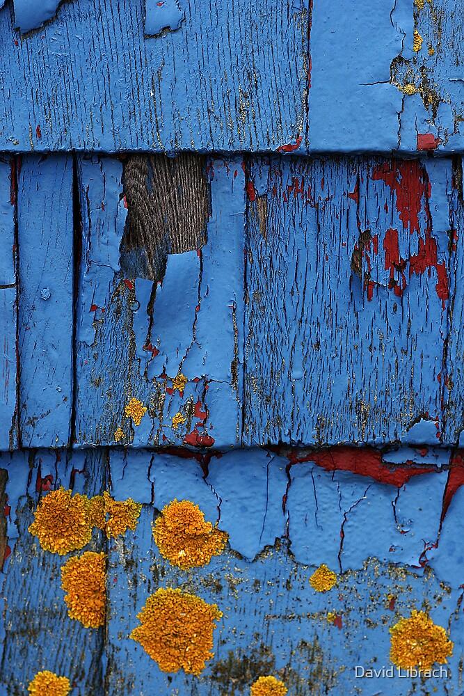 Blue by David Librach - DL Photography -