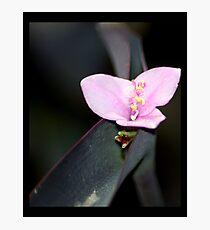 flower 30 Photographic Print