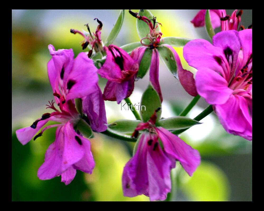 flower 31 by Kittin