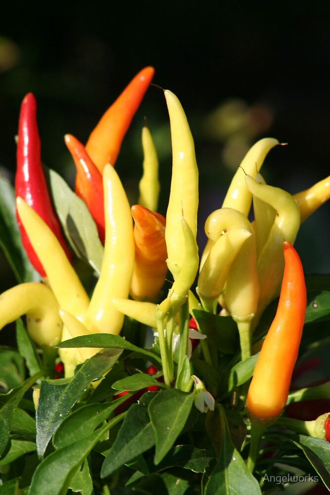 Peppers by Angelworks