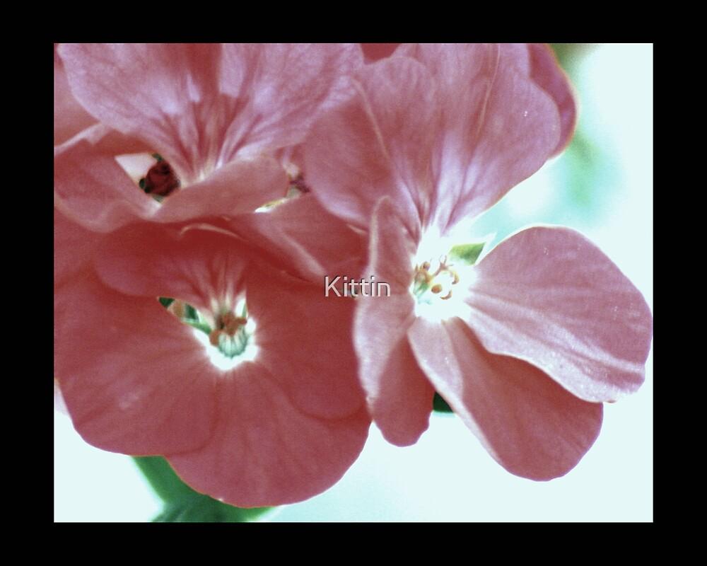 flower 33 by Kittin